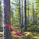 Skogen.